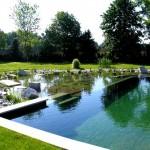 devis piscine naturelle